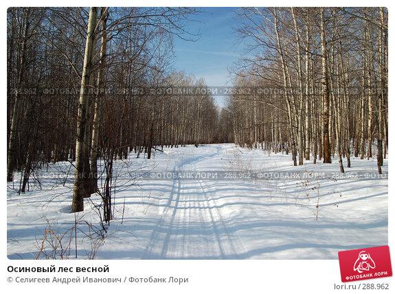 Купить «Осиновый лес весной», фото № 288962, снято 23 марта 2008 г. (c) Селигеев Андрей Иванович / Фотобанк Лори