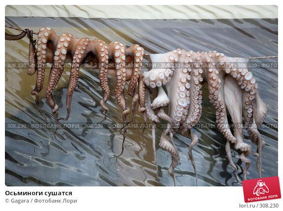 Осьминоги сушатся, фото № 308230, снято 12 марта 2008 г. (c) Gagara / Фотобанк Лори