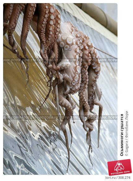 Осьминоги сушатся, фото № 308274, снято 12 марта 2008 г. (c) Gagara / Фотобанк Лори