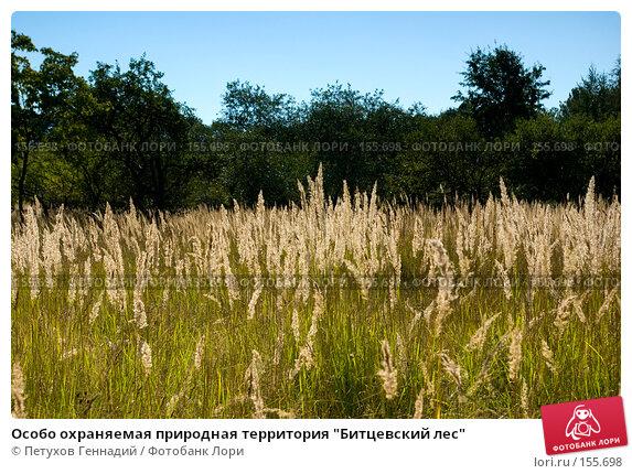 "Особо охраняемая природная территория ""Битцевский лес"", фото № 155698, снято 4 сентября 2007 г. (c) Петухов Геннадий / Фотобанк Лори"