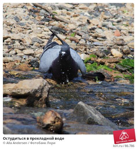 Купить «Остудиться в прохладной воде», фото № 86786, снято 26 мая 2007 г. (c) Alla Andersen / Фотобанк Лори