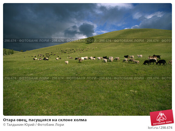 Отара овец, пасущаяся на склоне холма, фото № 298674, снято 20 января 2017 г. (c) Талдыкин Юрий / Фотобанк Лори