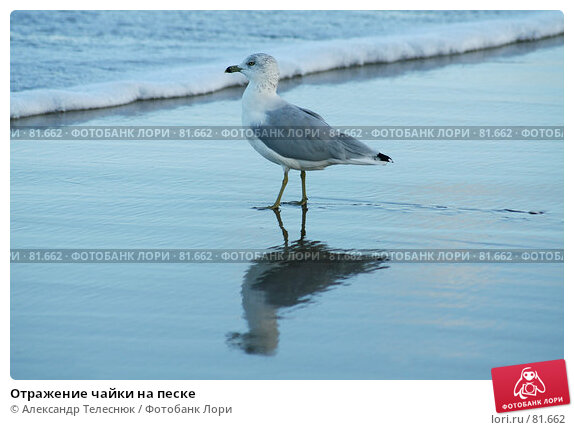 Отражение чайки на песке, фото № 81662, снято 12 сентября 2006 г. (c) Александр Телеснюк / Фотобанк Лори