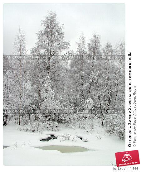 Оттепель. Зимний лес на фоне темного неба, фото № 111566, снято 15 февраля 2007 г. (c) Parmenov Pavel / Фотобанк Лори