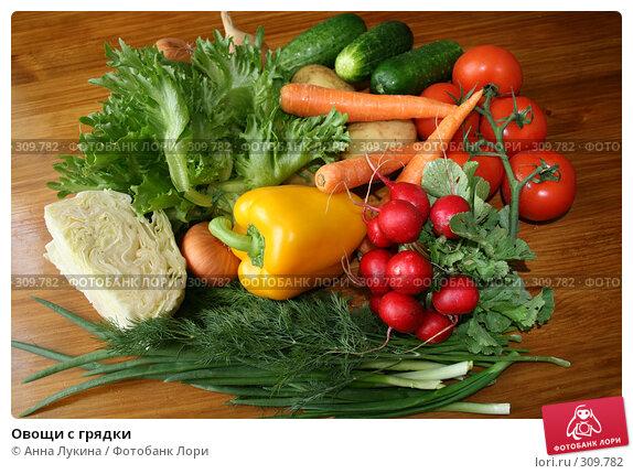 Овощи с грядки, фото № 309782, снято 4 июня 2008 г. (c) Анна Лукина / Фотобанк Лори