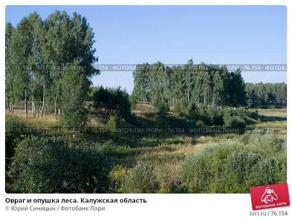 Овраг и опушка леса. Калужская область, фото № 76154, снято 11 августа 2007 г. (c) Юрий Синицын / Фотобанк Лори