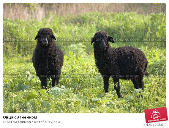 Купить «Овца с ягненком», фото № 298810, снято 2 мая 2008 г. (c) Артем Ефимов / Фотобанк Лори