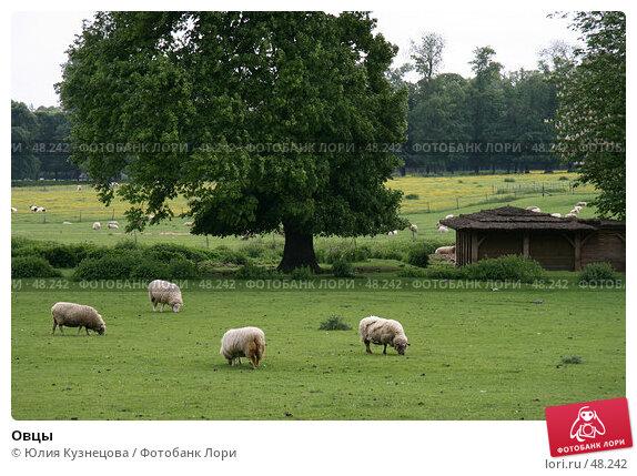 Овцы, фото № 48242, снято 9 мая 2007 г. (c) Юлия Кузнецова / Фотобанк Лори