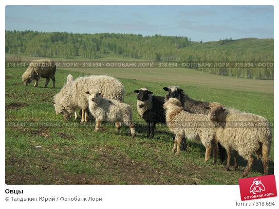 Овцы, фото № 318694, снято 24 мая 2008 г. (c) Талдыкин Юрий / Фотобанк Лори