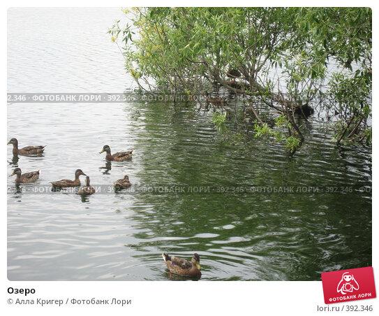 Купить «Озеро», фото № 392346, снято 11 июля 2007 г. (c) Алла Кригер / Фотобанк Лори