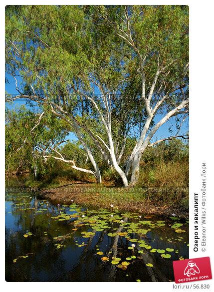 Купить «Озеро и эвкалипт», фото № 56830, снято 5 июля 2007 г. (c) Eleanor Wilks / Фотобанк Лори