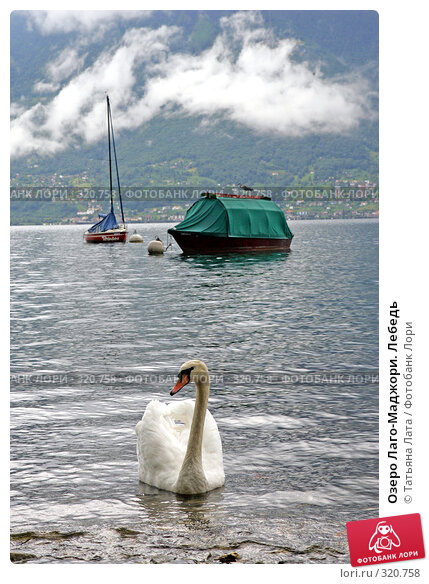 Озеро Лаго-Маджори. Лебедь, фото № 320758, снято 2 августа 2005 г. (c) Татьяна Лата / Фотобанк Лори
