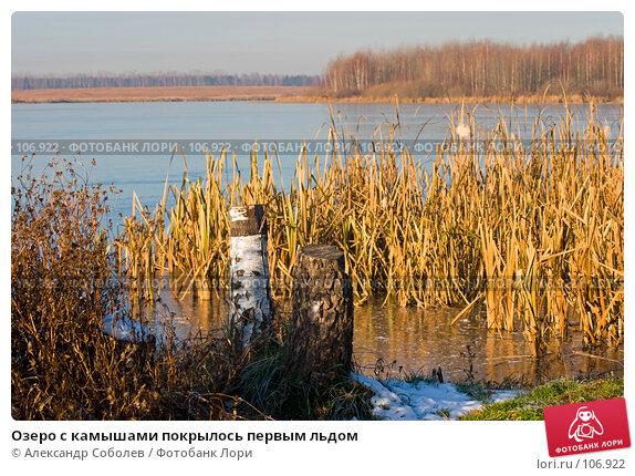 Озеро с камышами покрылось первым льдом, фото № 106922, снято 4 ноября 2005 г. (c) Александр Соболев / Фотобанк Лори
