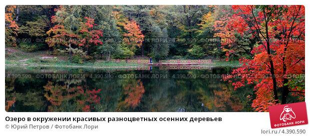 Озеро в окружении красивых разноцветных осенних деревьев (2005 год). Стоковое фото, фотограф Юрий Петров / Фотобанк Лори