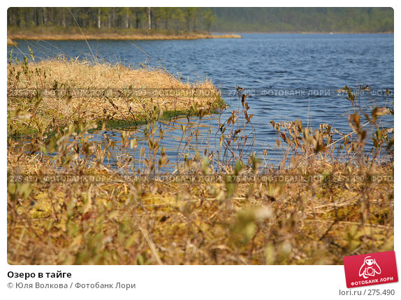 Озеро в тайге, фото № 275490, снято 3 мая 2008 г. (c) Юля Волкова / Фотобанк Лори