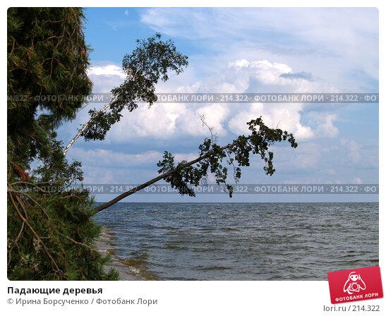 Купить «Падающие деревья», эксклюзивное фото № 214322, снято 19 августа 2007 г. (c) Ирина Борсученко / Фотобанк Лори