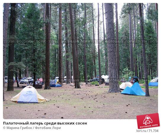 Палаточный лагерь среди высоких сосен, фото № 71734, снято 27 мая 2006 г. (c) Марина Грибок / Фотобанк Лори
