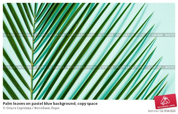 Купить «Palm leaves on pastel blue background, copy space», фото № 32934826, снято 1 июля 2019 г. (c) Ольга Сергеева / Фотобанк Лори