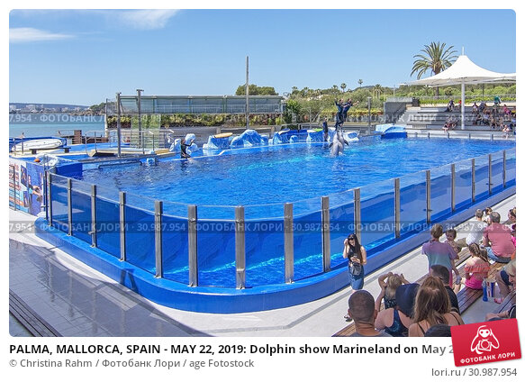 Купить «PALMA, MALLORCA, SPAIN - MAY 22, 2019: Dolphin show Marineland on May 22, 2019 in Palma, Mallorca, Spain.», фото № 30987954, снято 22 мая 2019 г. (c) age Fotostock / Фотобанк Лори