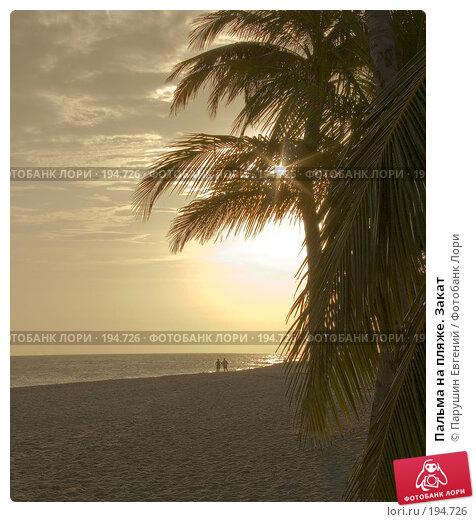 Пальма на пляже. Закат, фото № 194726, снято 27 июля 2017 г. (c) Парушин Евгений / Фотобанк Лори