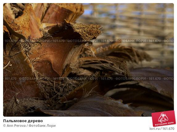 Купить «Пальмовое дерево», фото № 161670, снято 8 апреля 2007 г. (c) Ann Perova / Фотобанк Лори