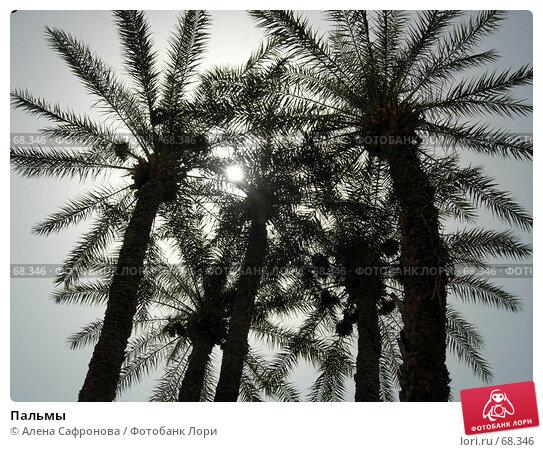 Пальмы, фото № 68346, снято 8 июля 2006 г. (c) Алена Сафронова / Фотобанк Лори