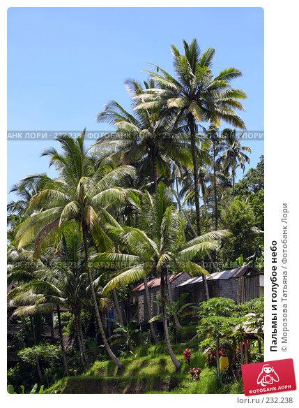 Пальмы и голубое небо, фото № 232238, снято 24 февраля 2008 г. (c) Морозова Татьяна / Фотобанк Лори