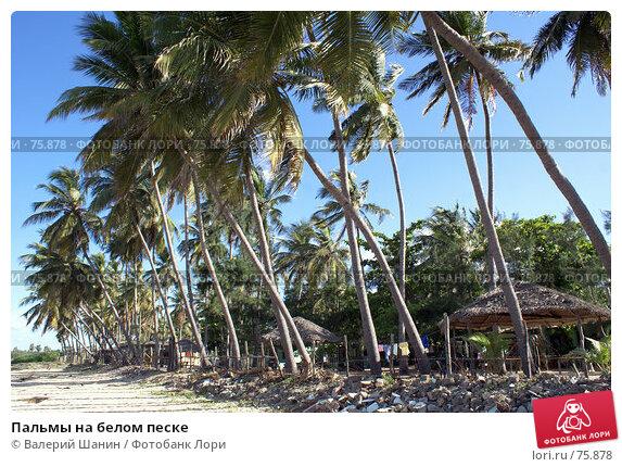 Пальмы на белом песке, фото № 75878, снято 30 мая 2007 г. (c) Валерий Шанин / Фотобанк Лори