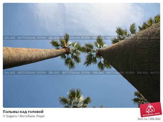 Купить «Пальмы над головой», фото № 306842, снято 11 марта 2008 г. (c) Gagara / Фотобанк Лори