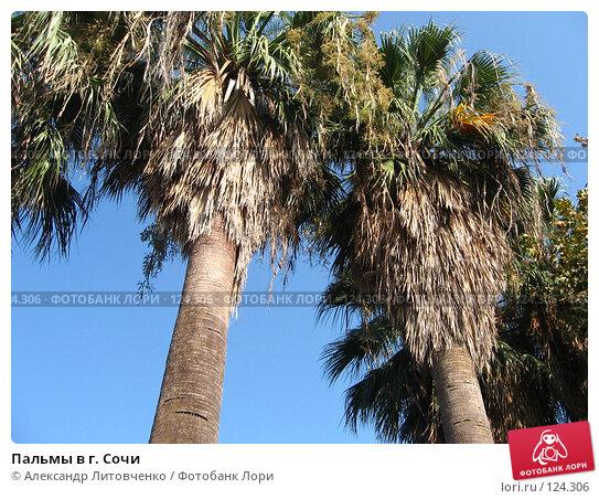 Пальмы в г. Сочи, фото № 124306, снято 8 сентября 2007 г. (c) Александр Литовченко / Фотобанк Лори