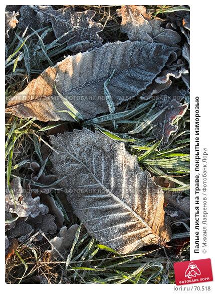Палые листья на траве, покрытые изморозью, фото № 70518, снято 15 января 2006 г. (c) Михаил Лавренов / Фотобанк Лори