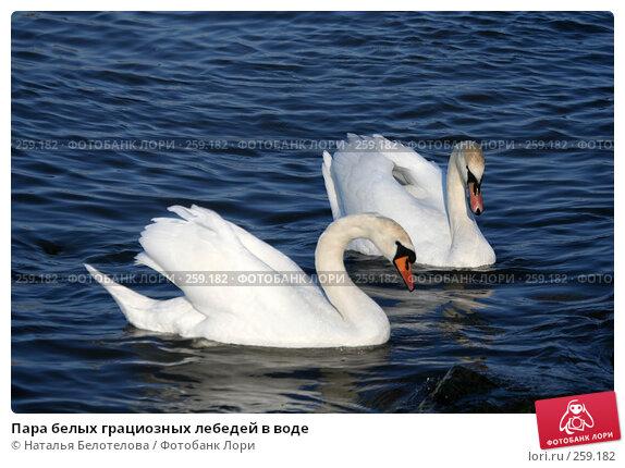 Купить «Пара белых грациозных лебедей в воде», фото № 259182, снято 29 марта 2008 г. (c) Наталья Белотелова / Фотобанк Лори