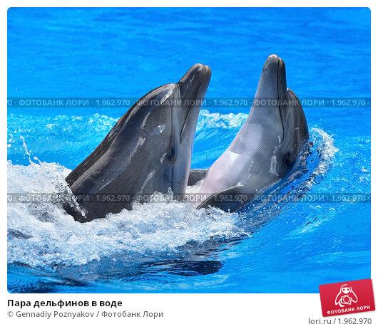 Купить «Пара дельфинов в воде», фото № 1962970, снято 21 августа 2010 г. (c) Gennadiy Poznyakov / Фотобанк Лори
