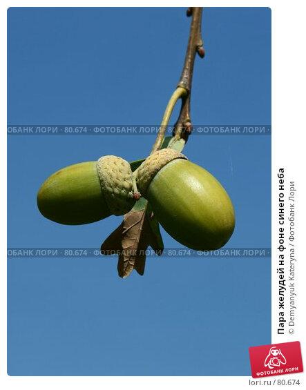 Купить «Пара желудей на фоне синего неба», фото № 80674, снято 8 сентября 2007 г. (c) Demyanyuk Kateryna / Фотобанк Лори