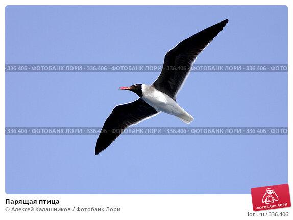 Парящая птица, фото № 336406, снято 10 июня 2008 г. (c) Алексей Калашников / Фотобанк Лори
