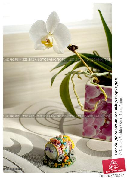 Пасха, декоративное яйцо и орхидея, фото № 228242, снято 19 марта 2008 г. (c) Tamara Sushko / Фотобанк Лори