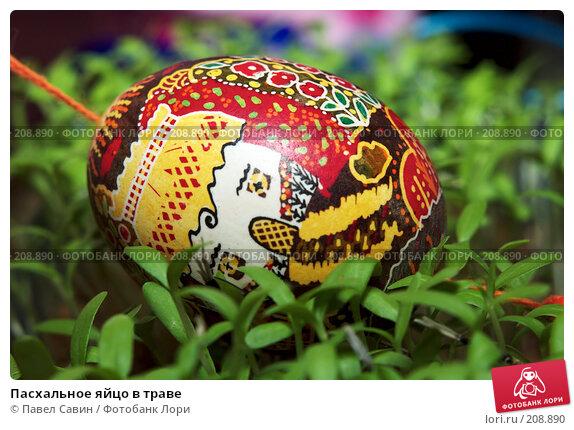 Пасхальное яйцо в траве, фото № 208890, снято 19 февраля 2008 г. (c) Павел Савин / Фотобанк Лори