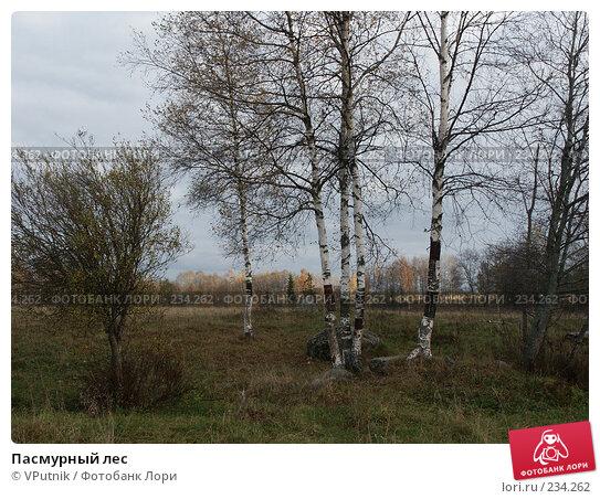 Пасмурный лес, фото № 234262, снято 8 октября 2005 г. (c) VPutnik / Фотобанк Лори