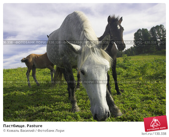 Пастбище. Pasture, фото № 130338, снято 28 февраля 2017 г. (c) Коваль Василий / Фотобанк Лори