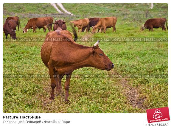 Pasture  Пастбище, фото № 310882, снято 11 августа 2004 г. (c) Кравецкий Геннадий / Фотобанк Лори