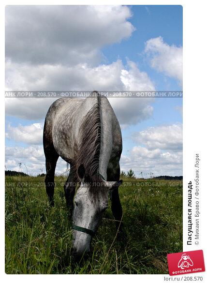 Пасущаяся лошадь, фото № 208570, снято 23 июня 2007 г. (c) Михаил Браво / Фотобанк Лори