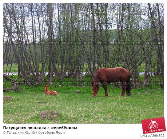 Пасущаяся лошадка с жеребёнком, фото № 299502, снято 24 мая 2008 г. (c) Талдыкин Юрий / Фотобанк Лори