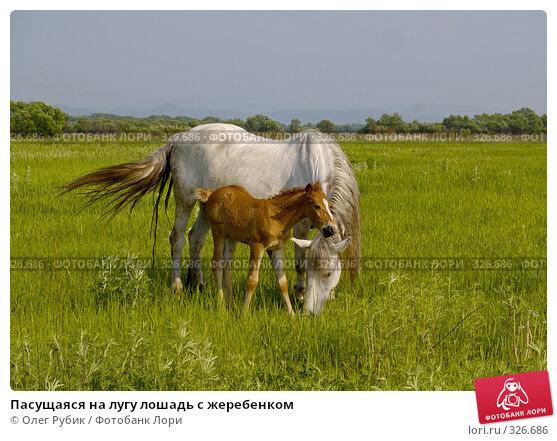 Пасущаяся на лугу лошадь с жеребенком, фото № 326686, снято 9 июня 2008 г. (c) Олег Рубик / Фотобанк Лори