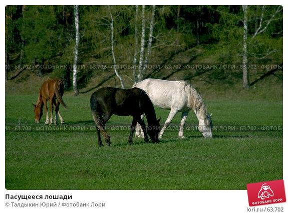 Пасущееся лошади, фото № 63702, снято 28 октября 2016 г. (c) Талдыкин Юрий / Фотобанк Лори