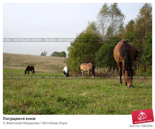 Пасущиеся кони, фото № 100054, снято 26 сентября 2007 г. (c) Анастасия Некрасова / Фотобанк Лори