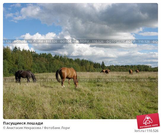 Пасущиеся лошади, фото № 110526, снято 5 сентября 2007 г. (c) Анастасия Некрасова / Фотобанк Лори