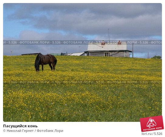 Пасущийся конь, фото № 5526, снято 18 июня 2005 г. (c) Николай Гернет / Фотобанк Лори