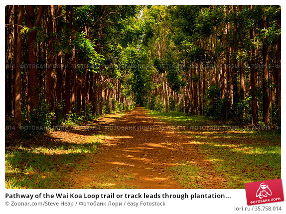 Pathway of the Wai Koa Loop trail or track leads through plantation... Стоковое фото, фотограф Zoonar.com/Steve Heap / easy Fotostock / Фотобанк Лори