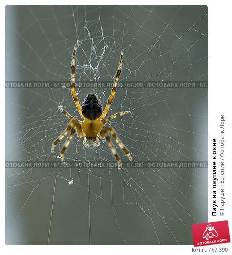Паук на паутине в окне, фото № 67390, снято 20 октября 2016 г. (c) Парушин Евгений / Фотобанк Лори