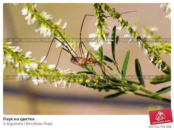Паук на цветке, фото № 59394, снято 13 июля 2006 г. (c) Argument / Фотобанк Лори